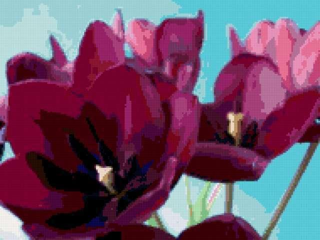 Фиолетовые цветы, предпросмотр