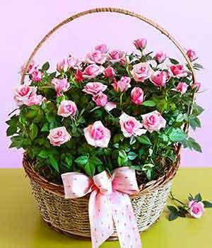 Basket with Pink Roses, рози, цветы