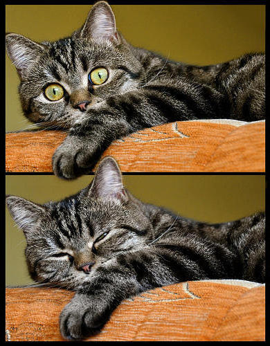 Dyptych - 2 Cats, �������