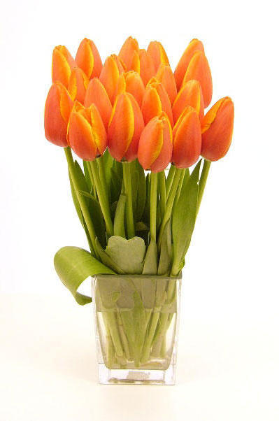 Bouquet of Tulips, �����, ����