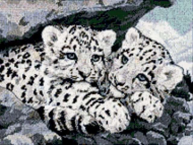 Котята снежного барса