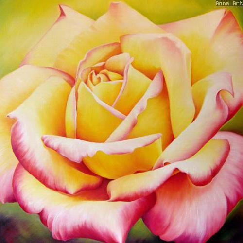 Чайная роза, роза, розы,