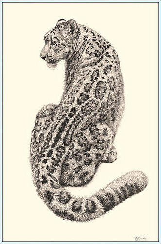 Leopard (Pencil Drawing), животны