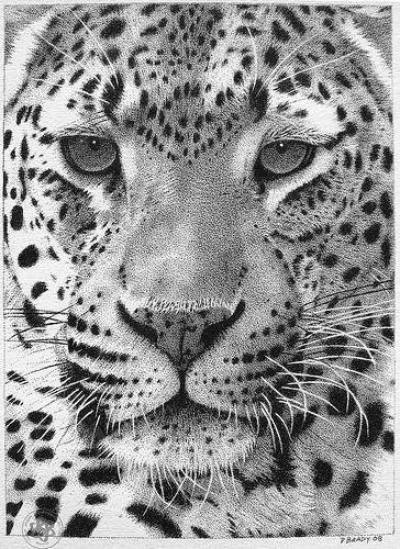 Leopard Head (Pencil Drawing), животны