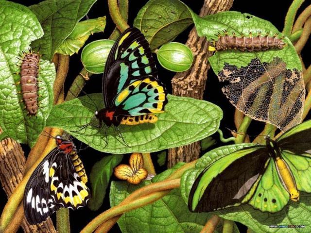 бабочка, цветы, гусеницы,