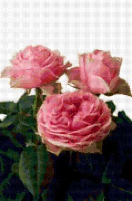 Три розы, предпросмотр