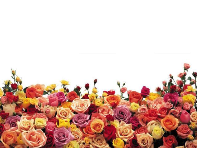 Цветочный бордюр, цветы