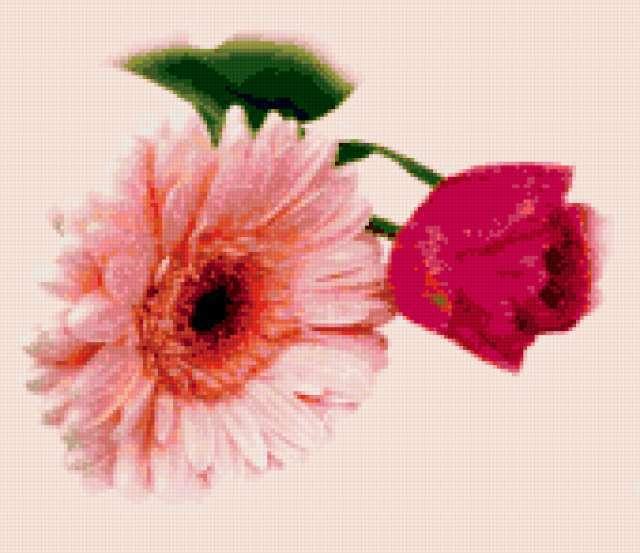 Гербера и роза, предпросмотр