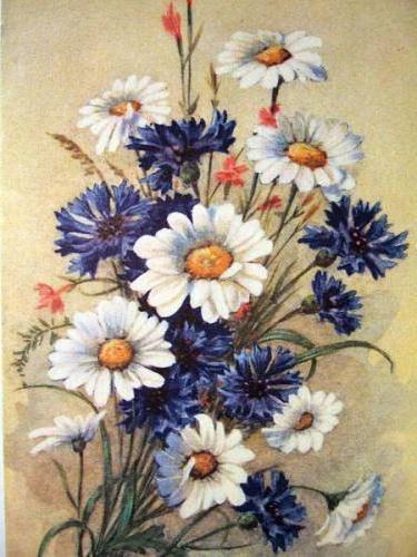 Васильки и ромашки, цветы,