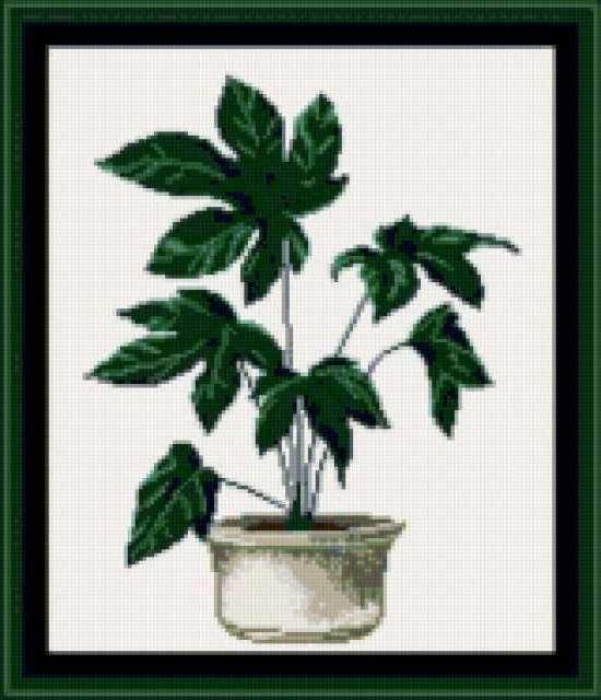 Комнатные растения-елень