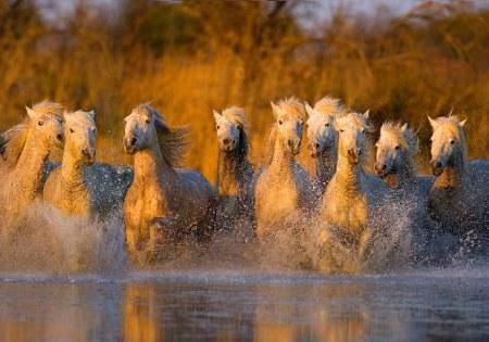 Табун лошадей, лошадки