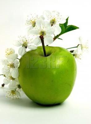 Apple and Apple Blossom, фрукты