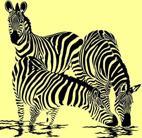 Зебры на водопое, оригинал