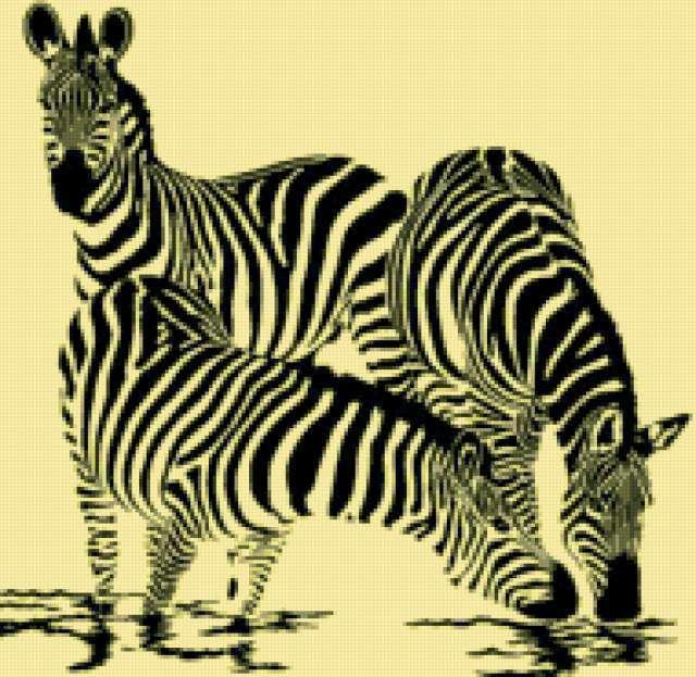 Зебры на водопое, предпросмотр