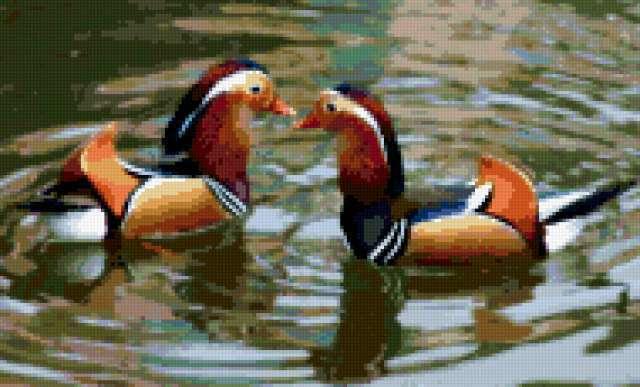 Уточки мандаринки