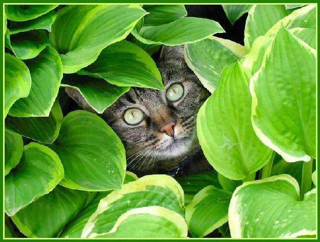 Cat and Green Leaves, животны
