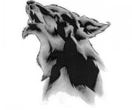 Волк, волк, монохром, животное
