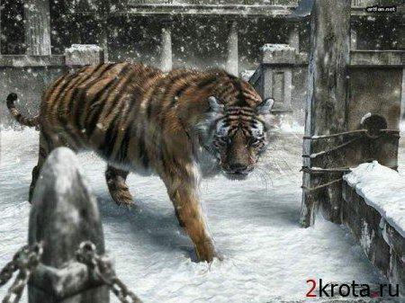 Тигр и снег, оригинал