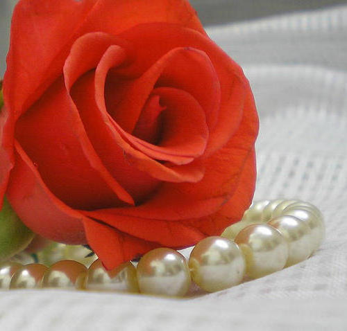 Rose and Pearls, цветы