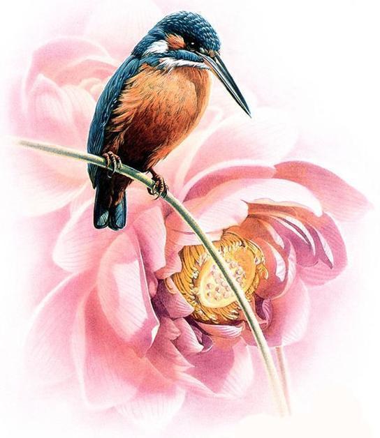 Колибри и цветок, цветок,