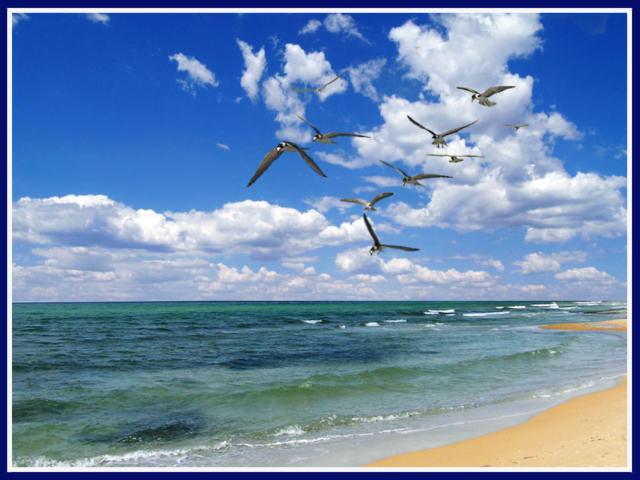 Чайки на море, море, океан,