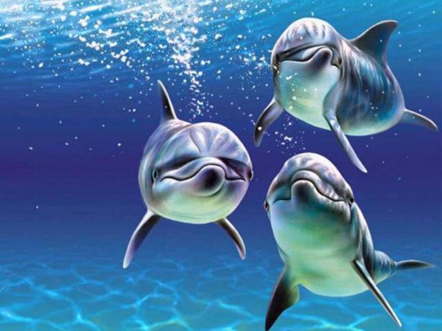 Морские обитатели 26, оригинал