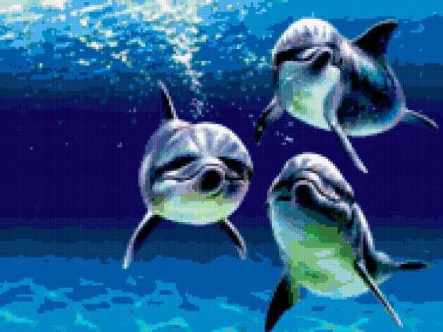 Морские обитатели 26