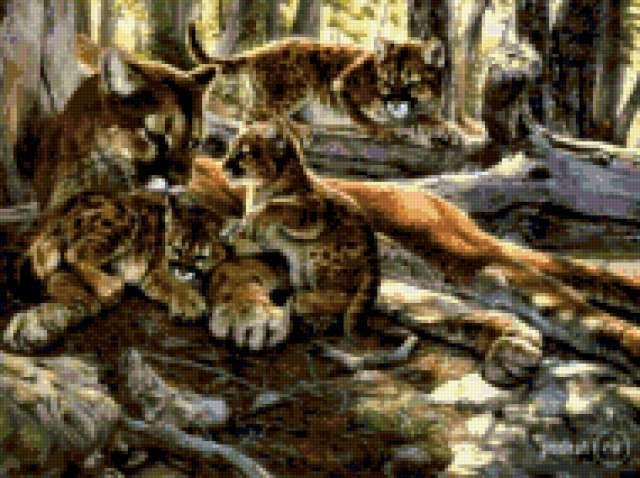 Львица, предпросмотр