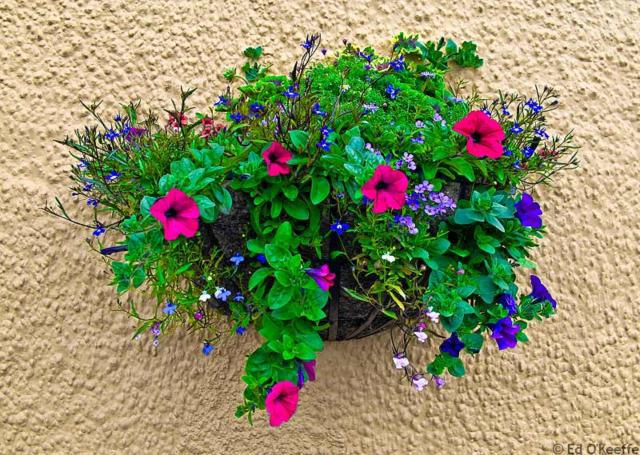 Hanging Basket with Flowers, �����, ����