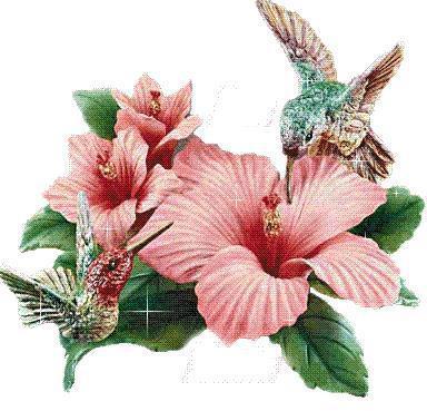 Две колибри, цветы, птицы,