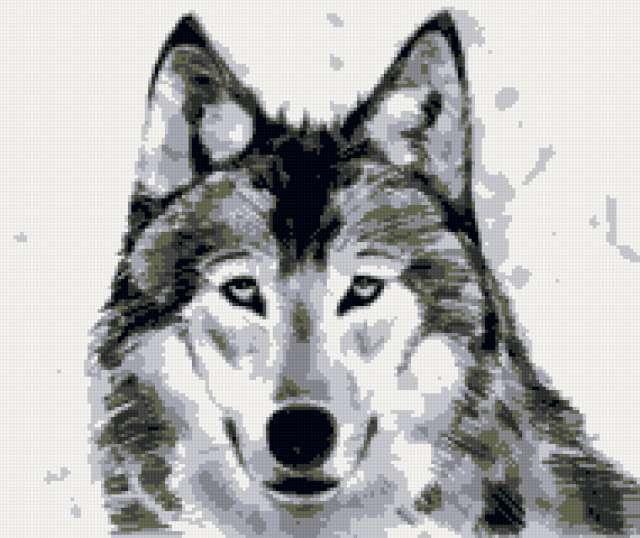 Волк, животные, волк, рисунок,