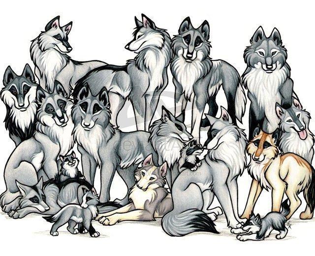 Семья, монохром, волк