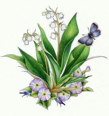 Lily of the Valley, цветы