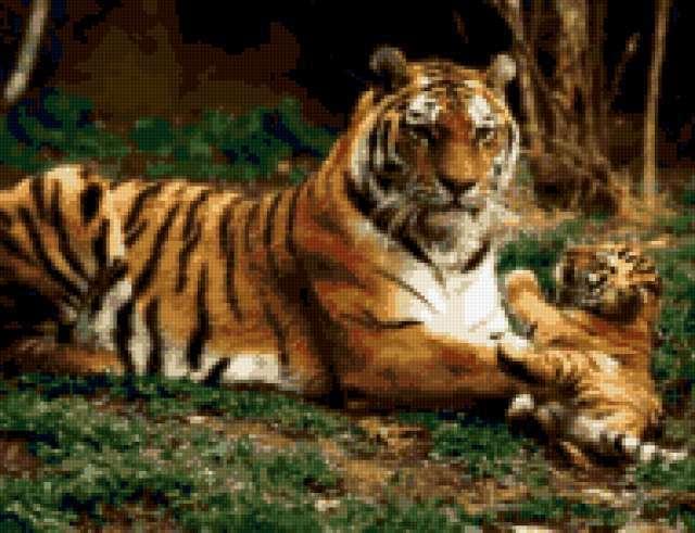 Тигриная семья, предпросмотр