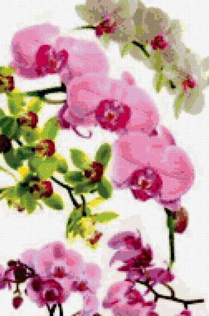 Ветки орхидеи, цветы, орхидеи