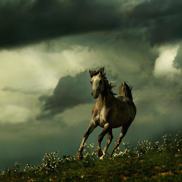 Схема вышивки «Бегущая лошадь»