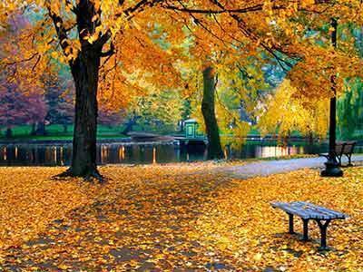 Золотая осень, осень, парк,