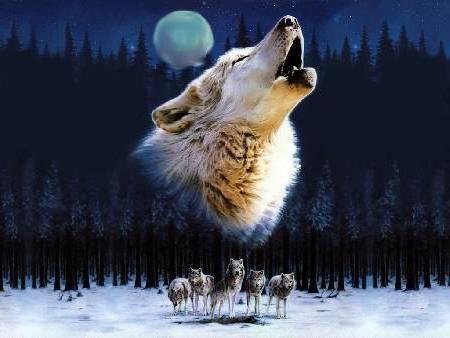 Рыжая волчица, волк, волки,