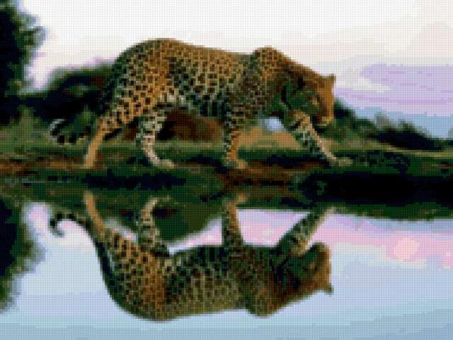 Ягуар на водопое, предпросмотр