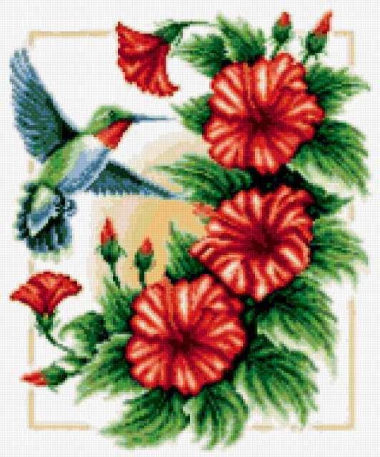 К схеме вышивки «Колибри и