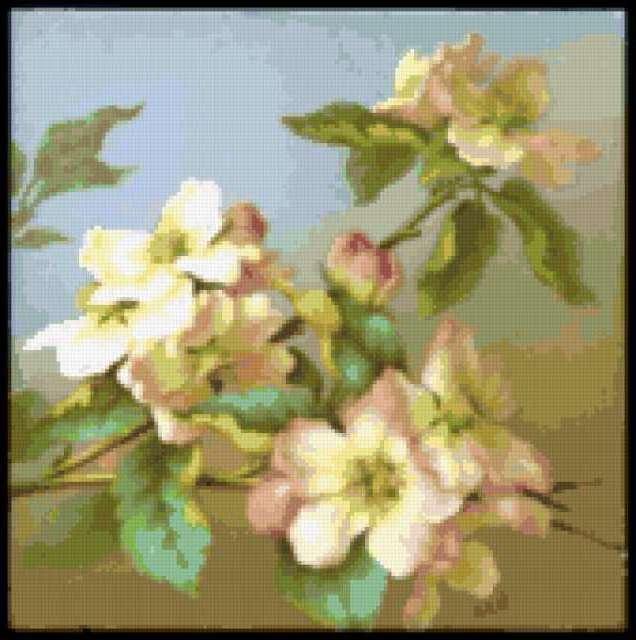 Ветка яблони, предпросмотр