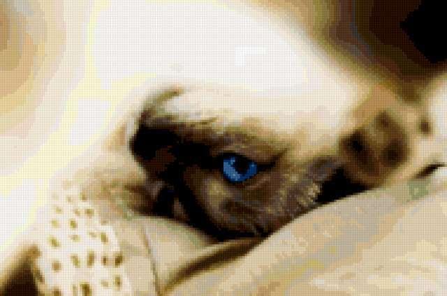 Сиамская кошка, животные