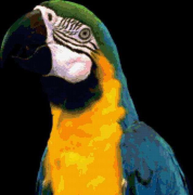 Синий ара, животные, попугай,