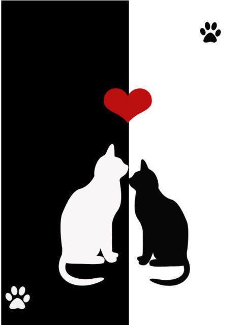 Чёрная кошка, белый кот,