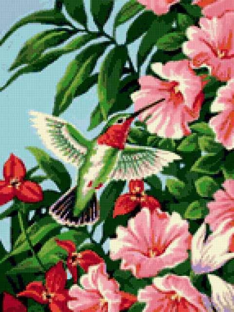Колибри и фуксия, цветы,
