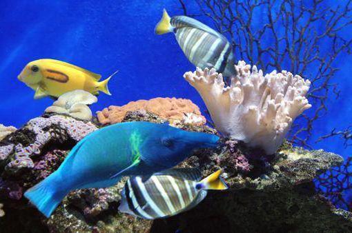 Аквариум., море, рыбы