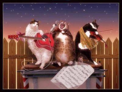 Музыкальные коты, коты