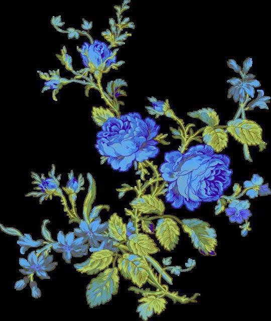 Синие розы, розы цветы
