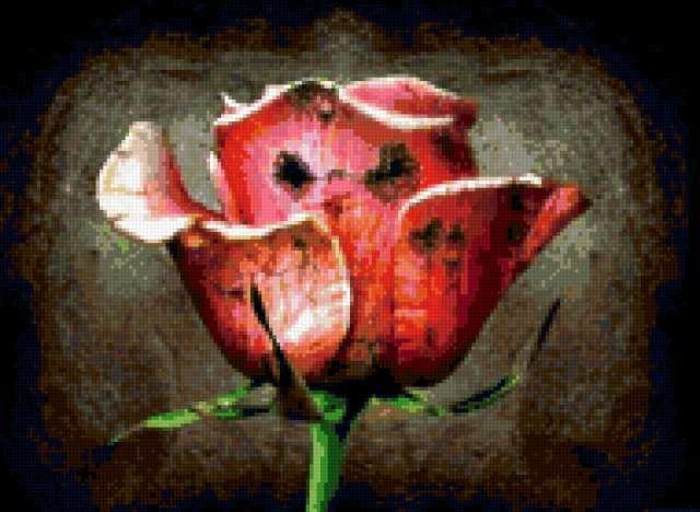 Необычные цветы, предпросмотр