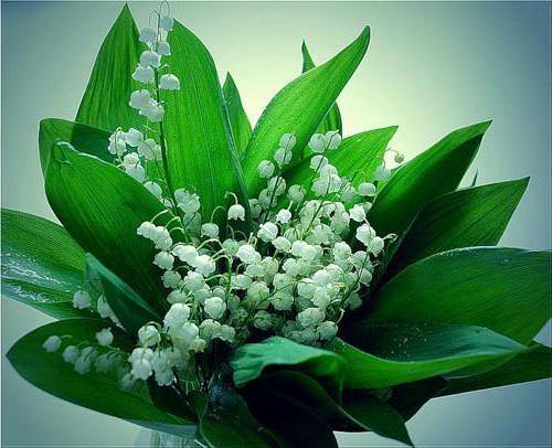 Букет ландышей, природа, цветы